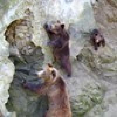 Избрани НОВИНИ от пресата за Вас... - Д-р Иван Иванов: Мечоците са изнервени и преди зимен сън стават по-чувствителни
