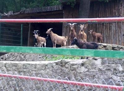 Зоопаркът в Айтос на 40 години - 5