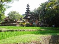 Bubo Anne Bali 2012